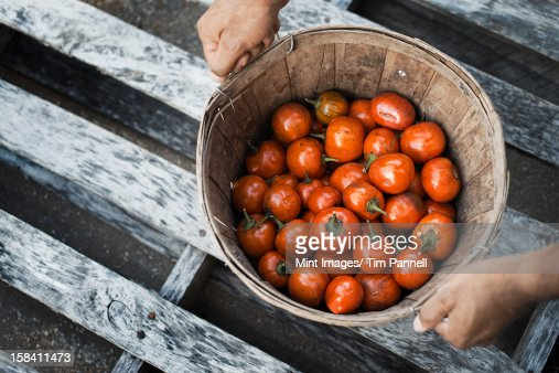 Organic Hungarian eggplants just harvested : Stock Photo