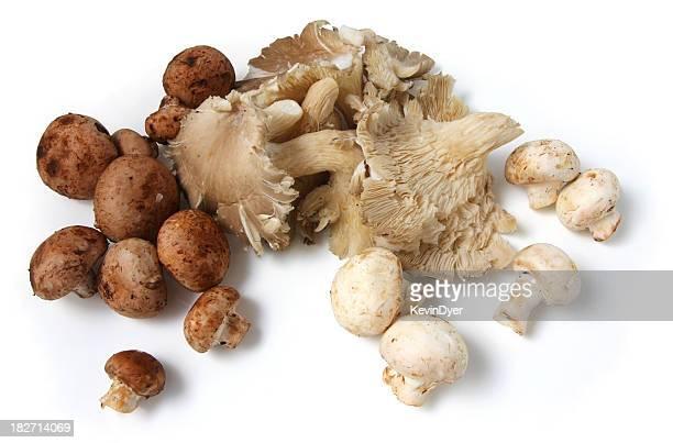 Organic Mushroom Selection
