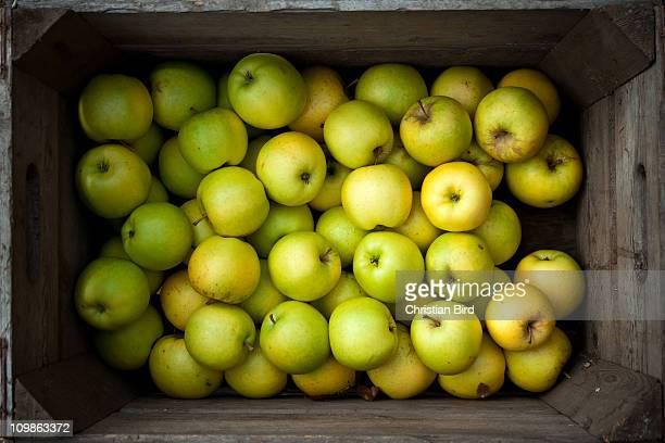 Organic Norfolk Apples