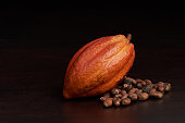 Organic raw cacao pod fruit. Chocolate production theme