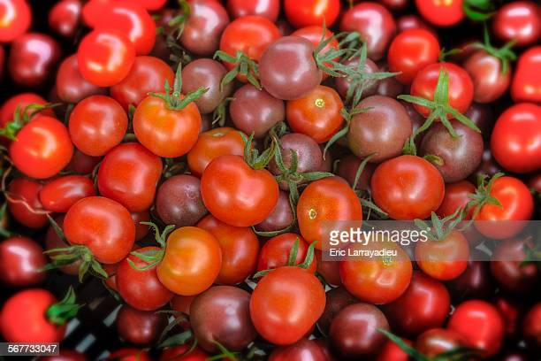 Organic red and black cherry tomatoes