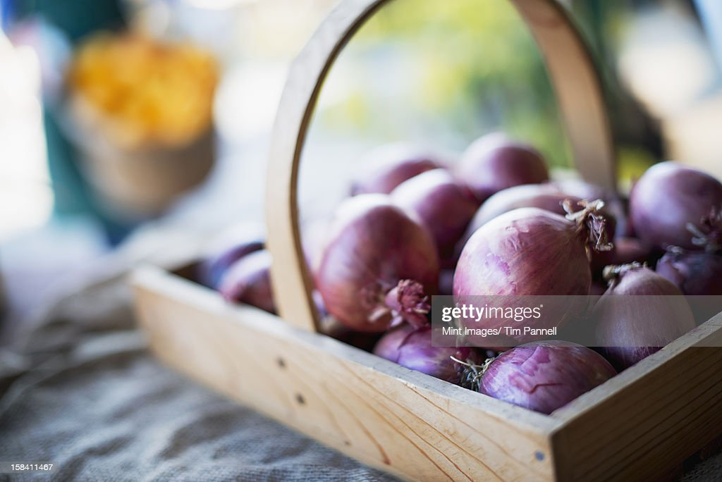 Organic Red Onions in a round basket. : Stock Photo