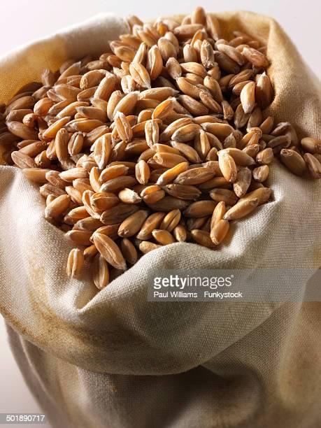 Organic spelt grains