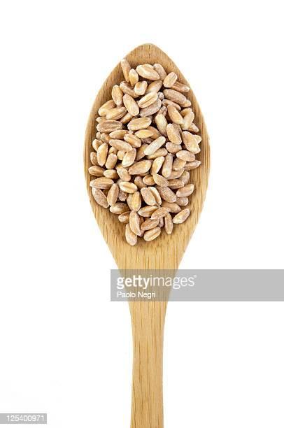 Organic Spelt Wheat seeds (Triticum spelta)
