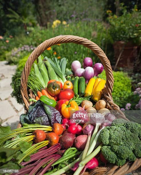 Organic Vegetable Garden Fresh Produce From Community Gardening