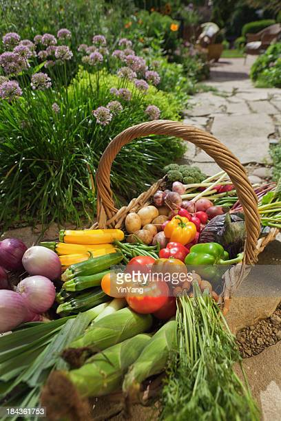 Organic Vegetable Garden Harvest Basket from Home Gardening Crop