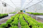 organic vegetable to plant on the farm to nursery environmental