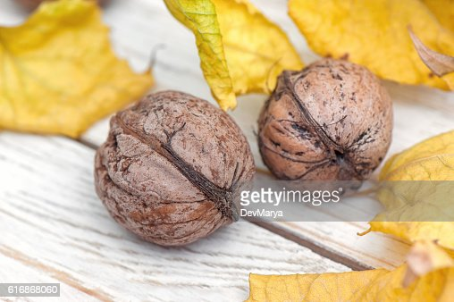 Organic walnuts with yellow leaves on white background : Stock Photo