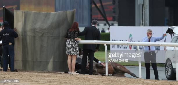 Organisers attend to horse Stormaral ridden by jockey Adrie de Vries after falling during the Godolphin Mile horse race at the Dubai World Cup in the...