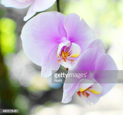 orhids : Stock Photo