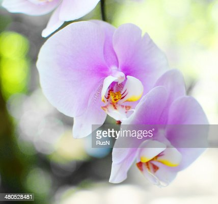orhids : Stockfoto