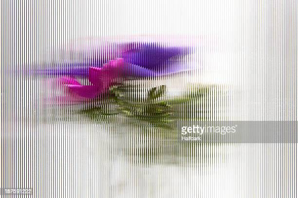Oriental poppies seen through beveled glass with a striped pattern