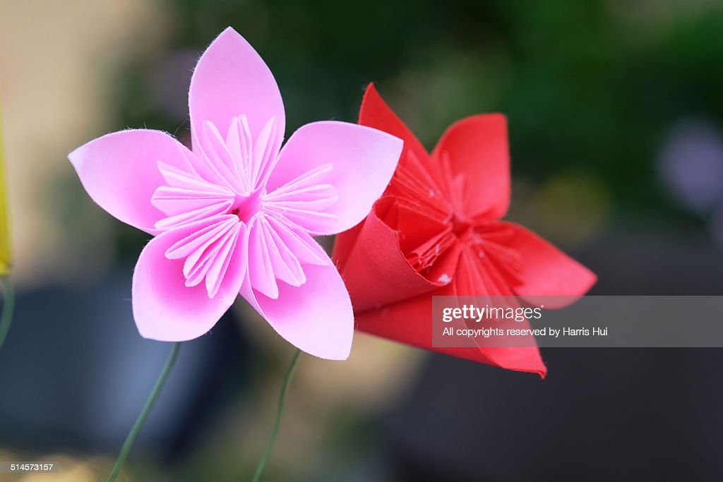 Origami cherry blossoms
