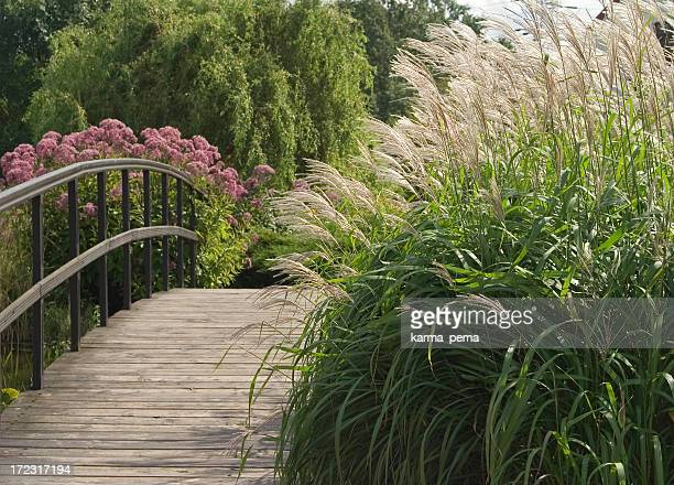 Ornamental grass next to a long wooden bridge