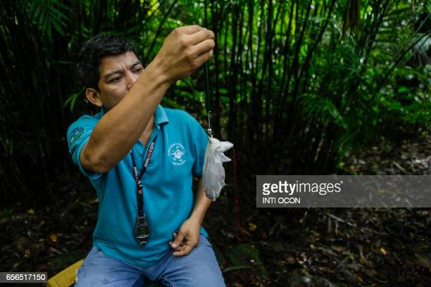 Ornithologist Roger Mendieta from the Cocibolca Foundation weighs a bird captured in a mist net as part of a study for their conservation at the...