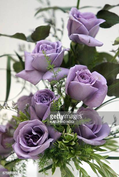 The world's first 'blue roses' developed by Japanese brewer Suntory are seen during a press preview for the Rose Show as part of the World Rose...