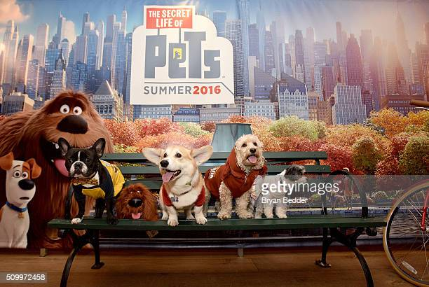 Oscar the Frenchie Wally the Corgi Ralphie the Cockapoo and Tinkerbelle the Dog attend The Secret Life of Pets toy line reveal at Toy Fair on...