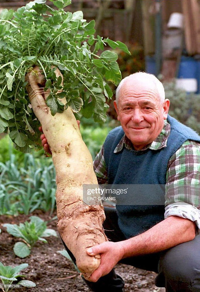 Oscar Wittmer, 71, shows off a giant white radish, weighing 23 pounds, that he harvested 19 December in his vegetable garden in the eastern French town of Selestat. The gardener says he used seaweed fertilizer and wrack to grow such an unusual radish.