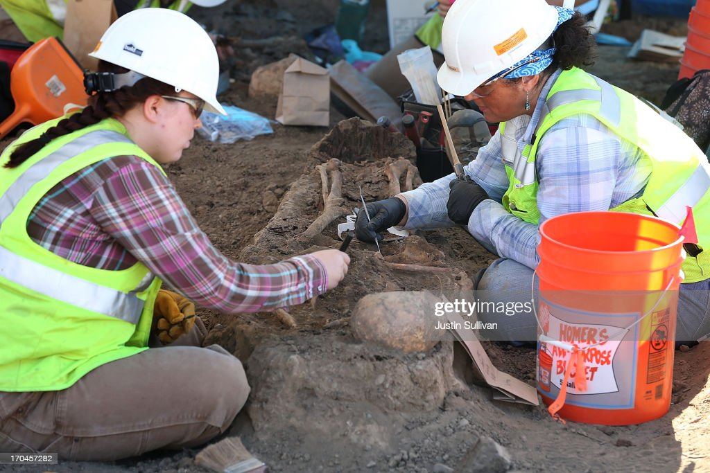 Osteologists brush away dirt from a human skeleton that was excavated from an historic graveyard discovered during construction at Santa Clara Valley Medical Center on June 13, 2013 in San Jose, California. Osteologists and archeologists have excavated the remains of 631 people from a construction site at Santa Clara Valley Medical Center along with a number of artifacts that date back to the late 1800s. The excavated graves are bellieved to have been from between the late 1800s and the 1920s. The potter's field, a graveyard reserved for burial of persons who were indigent, unknown or unclaimed, was uncovered by construction crews in February 2012 while doing grading work for the constructin of a new hospital services Building.