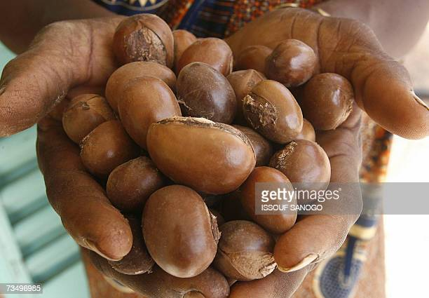 A woman from a cooperative holds shea nuts 02 March 2007 in a neighborhood of Ouagadougou As cosmetics containing shea butter pop up on more and more...