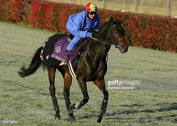 Ouija Board from Great Britain with jockey Frankie Dettori aboard trains during morning workouts in preparation for the Breeders' Cup mat Churchill...