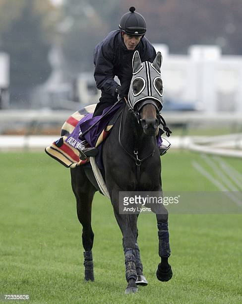 Ouija Board runs on the turf track at Churchill Down on November 1 2006 the site of Saturday's Breeders' Cup Louisville Kentucky