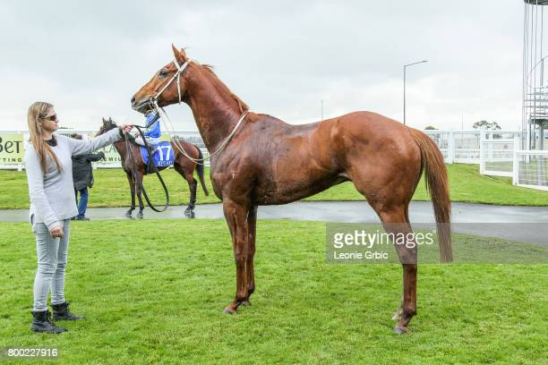 Our Foxwedge after winning the First National Real Estate 3YO Maiden Plate at Moe Racecourse on June 24 2017 in Moe Australia