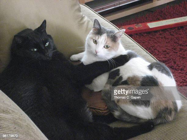 Our Kitties