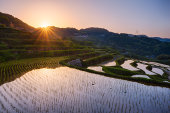 Oura Rice Terraces during sunrise