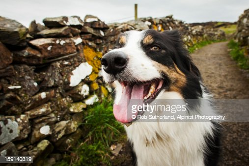 Out for a Walk : Stock Photo