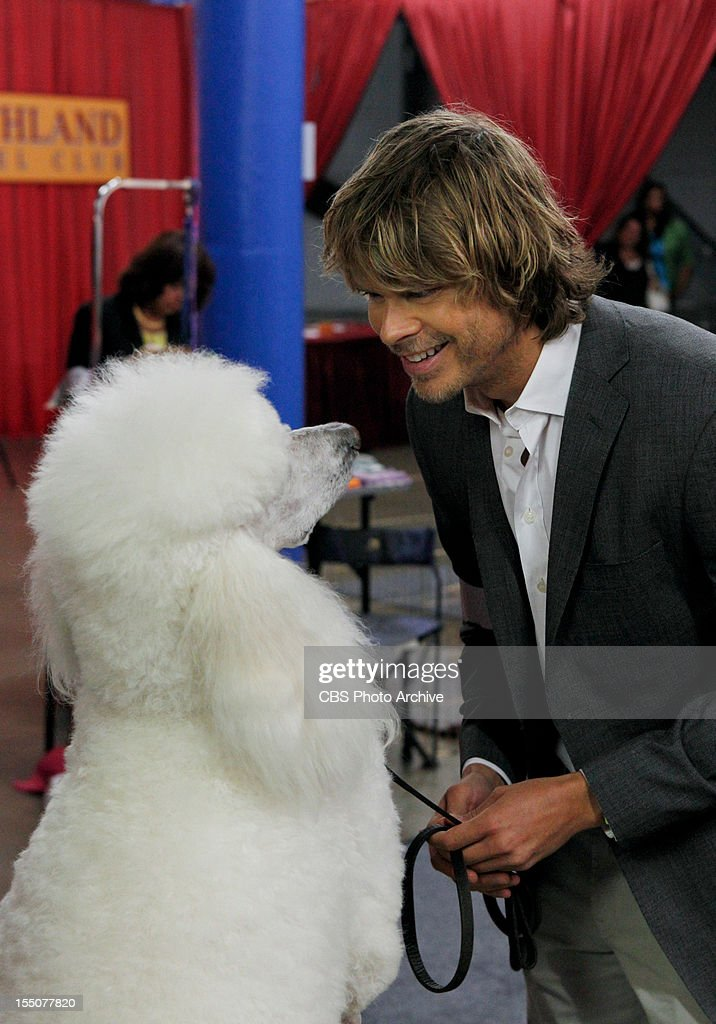 Eric Christian Olsen (LAPD Liaison Marty Deeks) with 'œChaucer' (Ramen, the dog). When a CIA agent who worked with Sam Hanna over eight years ago seeks his help and is soon found dead of an apparent suicide, Hanna and Callen suspect foul play and a bigger conspiracy. Meanwhile, Deeks finds his inner 'œdog whisperer' with Kensi as the two go undercover and enter a dog show with a prized poodle, on