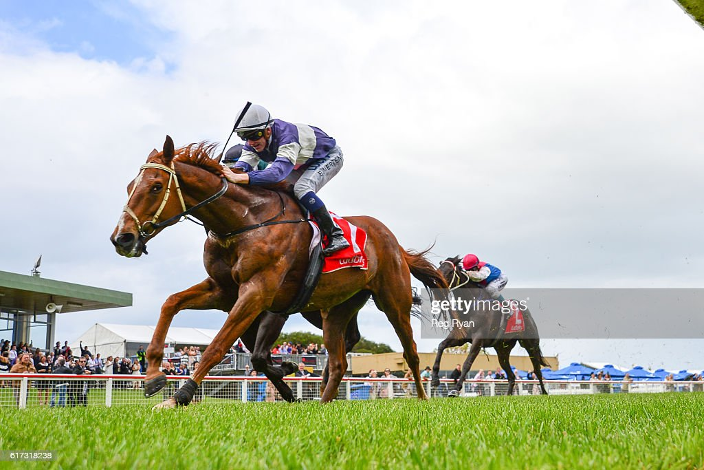 Outback Grande ridden by Beau Mertens wins Ladbrokes Up For The Challenge BM64 Handicap at Sale Racecourse on October 23, 2016 in Sale, Australia.