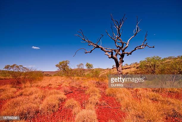 Outback Western Australia - Tree in Karijini National Park