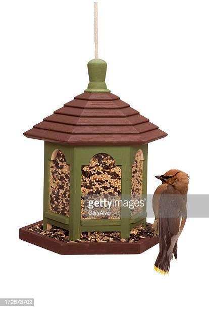 Outdoor bird feeder with cedar waxwing