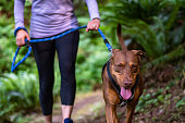 Close up of a female baby boomer in a purple top and black running pants on an evening walk with her happy dog on a forest trail