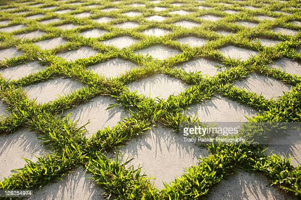 Outdoor flooring with grass and paving stones