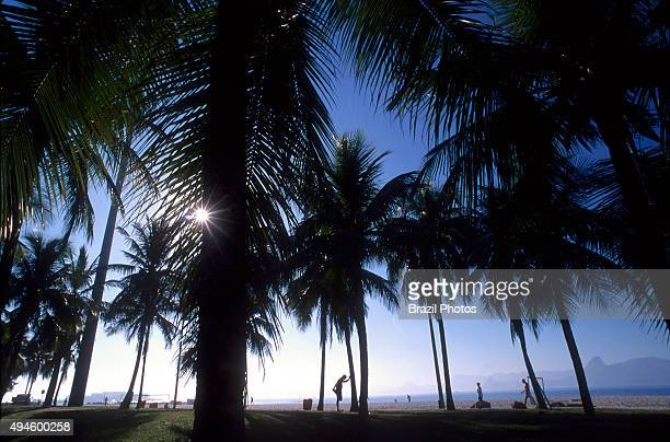 Outdoor recreation man exercising among palm trees in Flamengo park Rio de Janeiro Brazil also known as Aterro do Flamengo the Brigadeiro Eduardo...