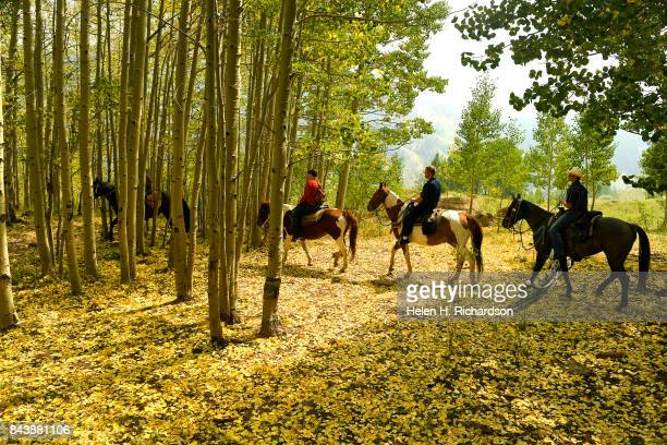 WILDERNESS CO SEPTEMBER 6 Outfitters Jared Wester far left and Connor Quezada right lead riders through a beautiful Aspen grove during a trail ride...
