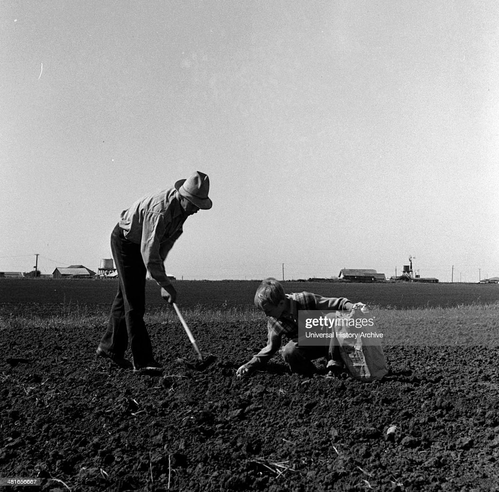 Outskirts of Salinas California Father and son planting potatoes These people are lettuce workers migrants from Southwest by Dorothea Lange 18951965...