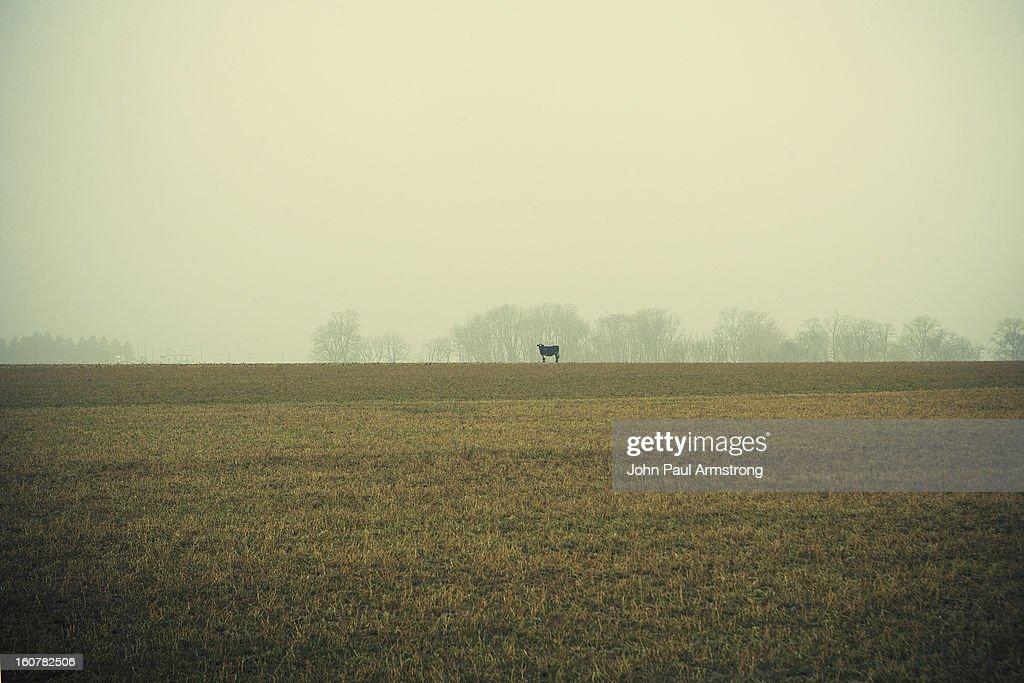 Outstanding in a field