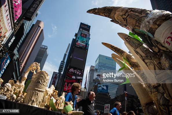 Over one ton of ivory confiscated by law enforcement sits on display before being destroyed in Times Square on June 19 2015 in New York City The...