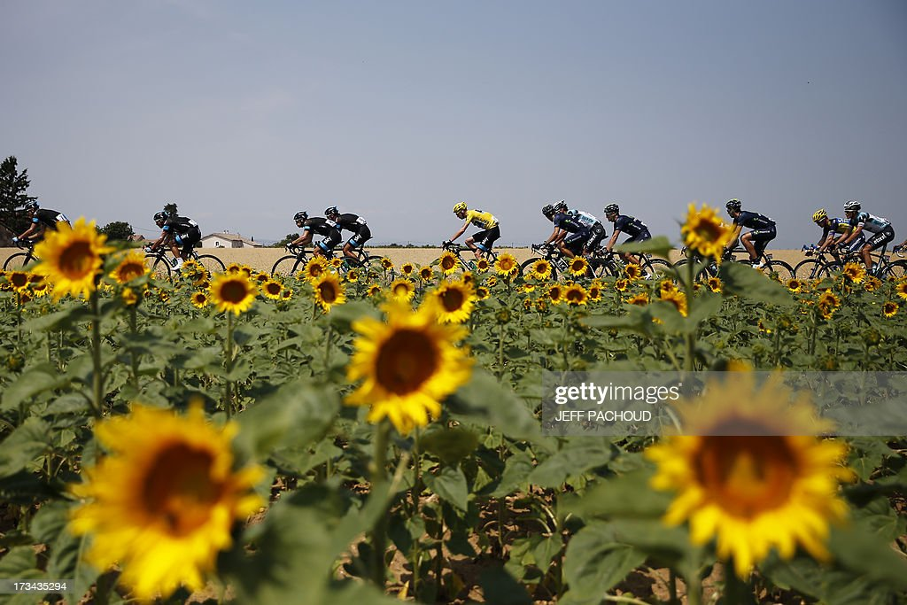Overall leader's yellow jersey Britain's Christopher Froome rides in the pack past a sunflowers field during the 242.5 km fifteenth stage of the 100th edition of the Tour de France cycling race on July 14, 2013 between Givors and Mont Ventoux, southeastern France.