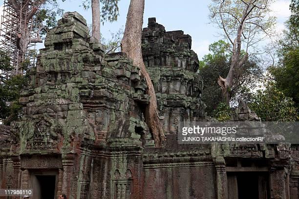 Overgrown Tree on Ta Prohm Ruins