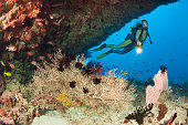Overhang with Sea Fan and Diver Himendhoo Thila North Ari Atoll Maldives