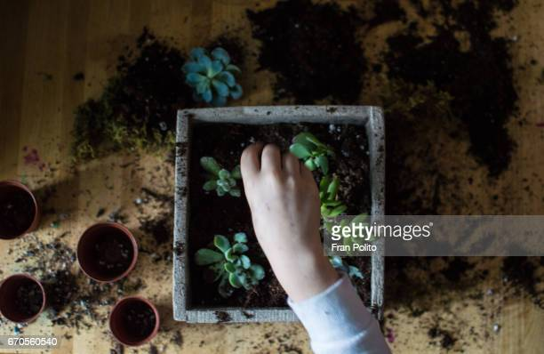 Overhead shot of children planting succulents.