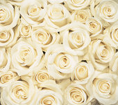 Overhead View of a Large Group of White Roses Crowded Together