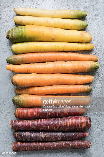 Overhead view of a row of carrot varieties