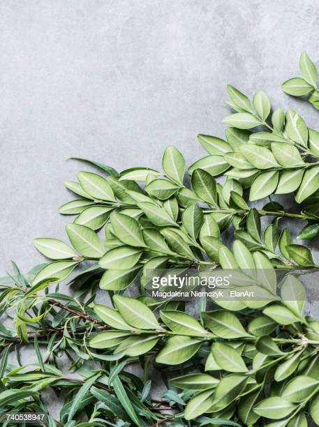 Overhead view of bunches of leaves