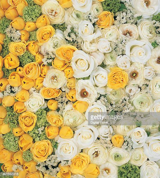 Overhead View of Crowded Blossoms With Yellow and White Roses