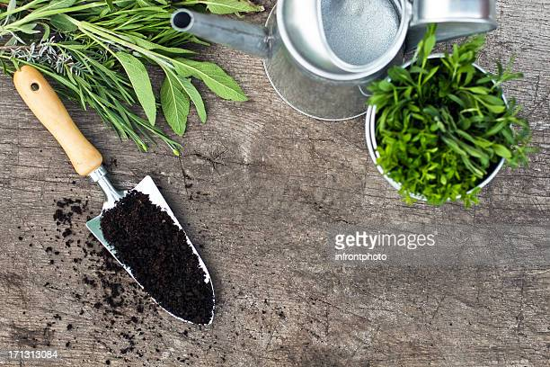 Overhead view of gardening tools and herbs